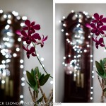 Fuji XF 35mm F1.4 vs. Panasonic 25 F1.4 Summilux at F2.0