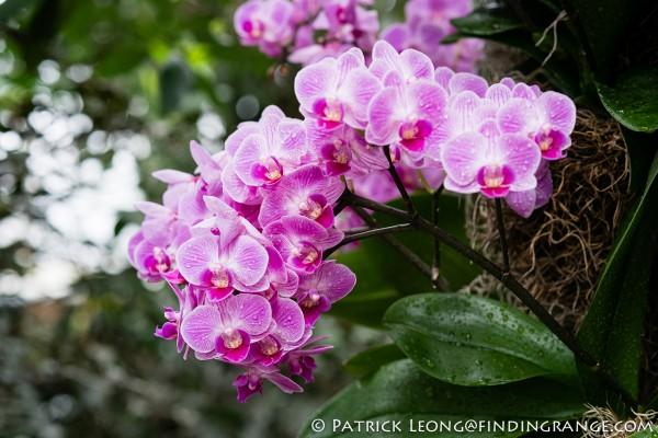 Fuji X-Pro1 and XF 60mm F2.4 Macro Lens Botanical Garden 7