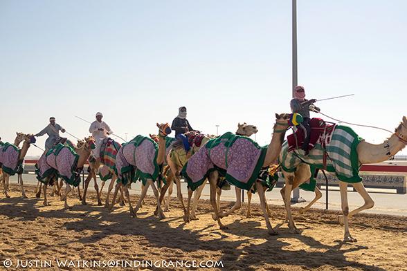 Dubai-Camel-Ride-Olympus-OM-D-E-M1-Panasonic-25mm-F1.4