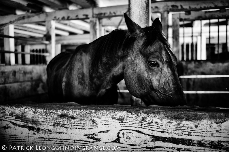 Leica-M9-35mm-Summicron-ASPH-Lancaster-Pennsylvania-Amish-Farm-Horse