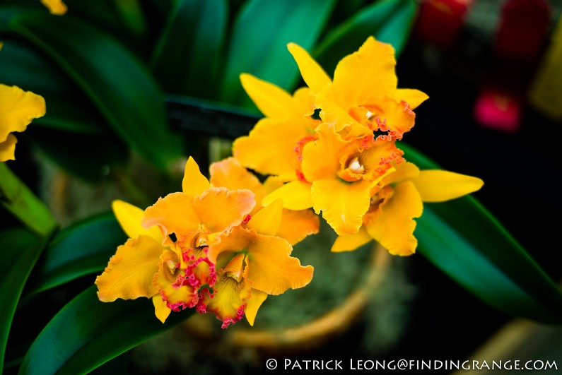 Deep-Cut-Orchid-Society-18th-Annual-Orchid-Show-Leica-M-Typ-240-50mm-Summilux-ASPH-11
