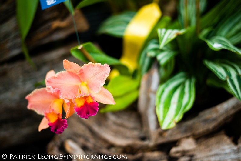 Deep-Cut-Orchid-Society-18th-Annual-Orchid-Show-Leica-M-Typ-240-50mm-Summilux-ASPH-12