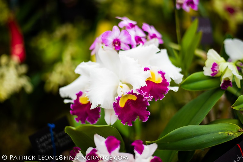 Deep-Cut-Orchid-Society-18th-Annual-Orchid-Show-Leica-M-Typ-240-50mm-Summilux-ASPH-6