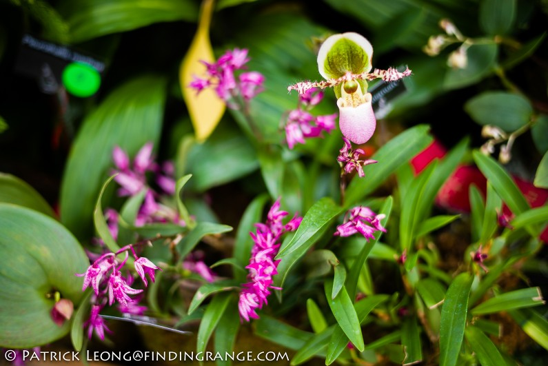 Deep-Cut-Orchid-Society-18th-Annual-Orchid-Show-Leica-M-Typ-240-50mm-Summilux-ASPH-8