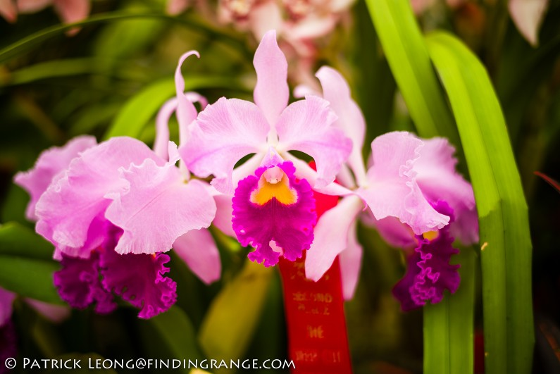 Deep-Cut-Orchid-Society-18th-Annual-Orchid-Show-Leica-M-Typ-240-50mm-Summilux-ASPH-9