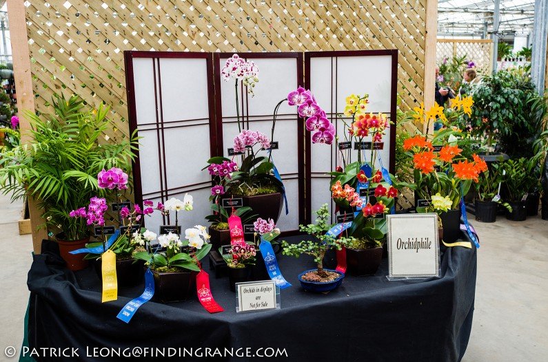 Deep-Cut-Orchid-Society-18th-Annual-Orchid-Show-Leica-X-Typ-113-3
