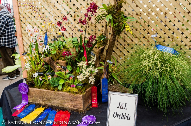 Deep-Cut-Orchid-Society-18th-Annual-Orchid-Show-Leica-X-Typ-113-4