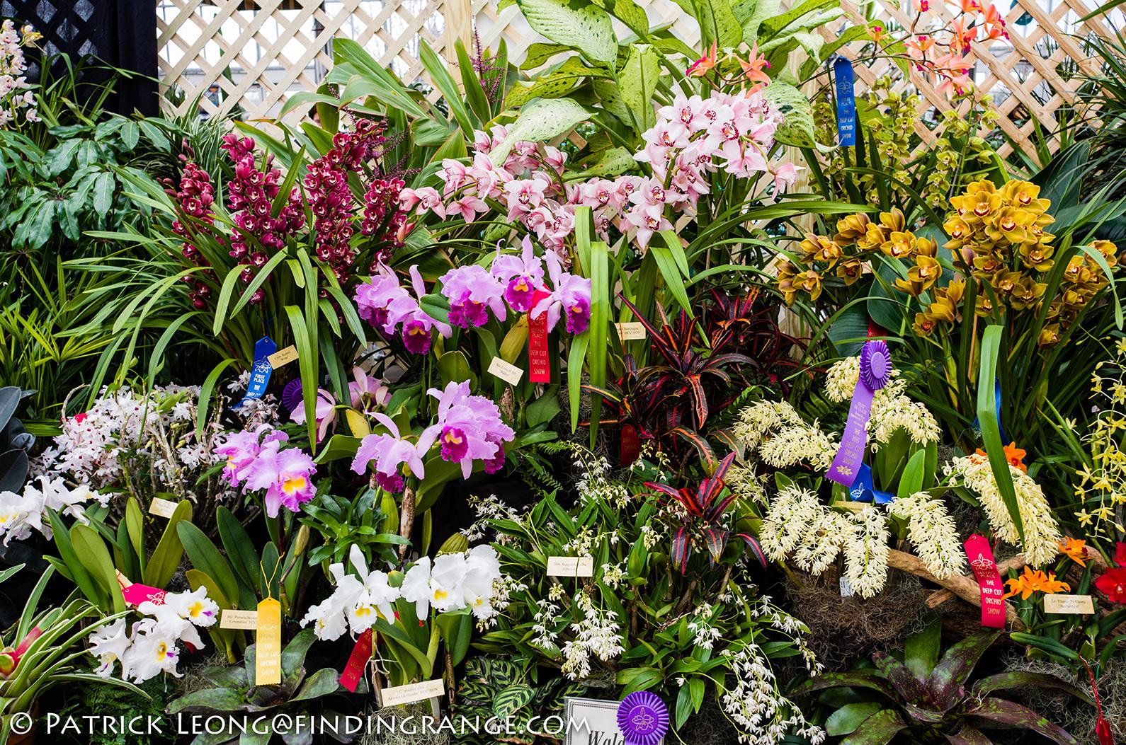 Комнатные цветы орхидей фото и названия