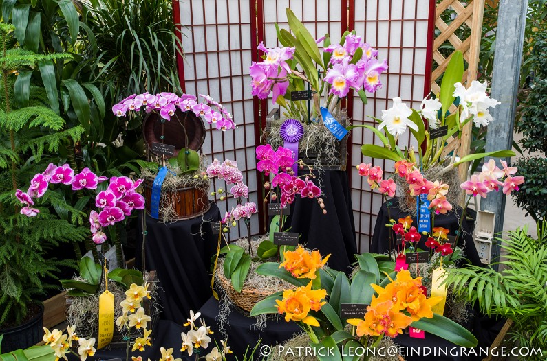 Deep-Cut-Orchid-Society-18th-Annual-Orchid-Show-Leica-X-Typ-113-6