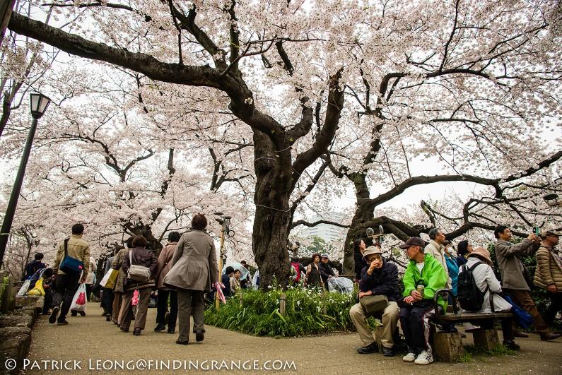Leica-M-Typ-240-21mm-Summilux-ASPH-Cherry-Blossom-Kitanomaru-Park-Chiyoda-Tokyo-Japan-2