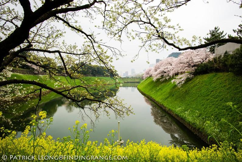 Leica-M-Typ-240-21mm-Summilux-Cherry-Blossom-Tree-Kitanomaru-Park-Chiyoda-Toyko-Japan-1