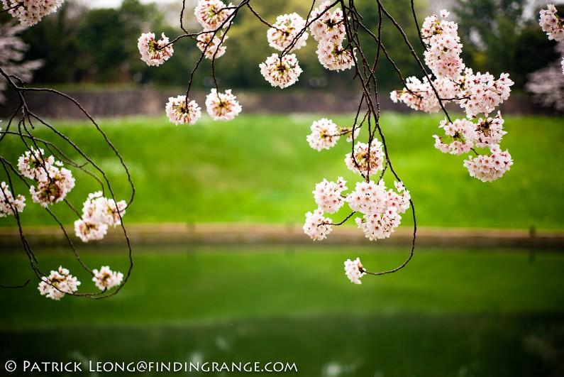 Leica-M-Typ-240-21mm-Summilux-Cherry-Blossom-Tree-Kitanomaru-Park-Chiyoda-Toyko-Japan-2
