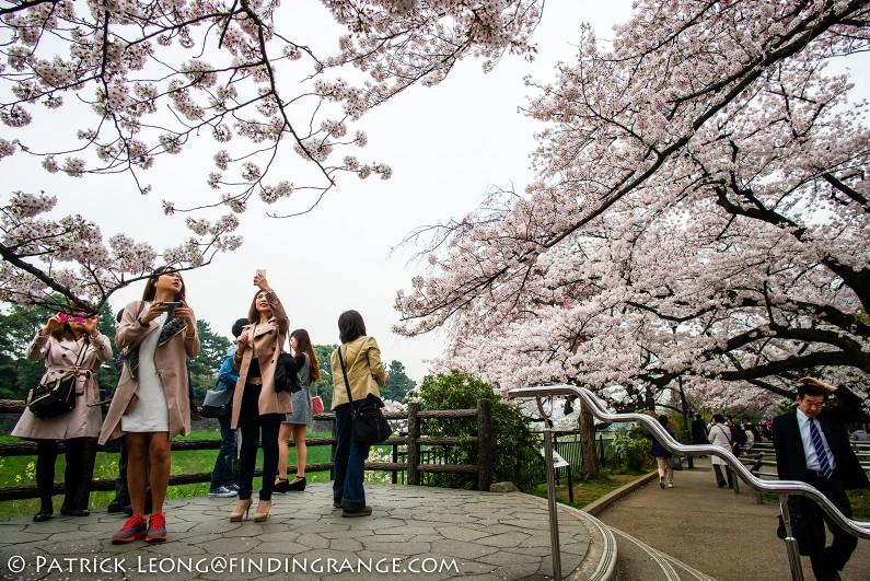 Leica-M-Typ-240-21mm-Summilux-Cherry-Blossom-Tree-Kitanomaru-Park-Chiyoda-Toyko-Japan-3