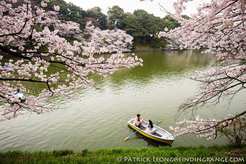 Leica-M-Typ-240-21mm-Summilux-Cherry-Blossom-Tree-Kitanomaru-Park-Chiyoda-Toyko-Japan-4