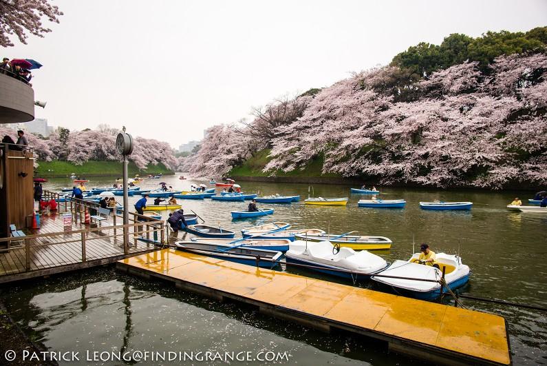 Leica-M-Typ-240-21mm-Summilux-Cherry-Blossom-Tree-Kitanomaru-Park-Chiyoda-Toyko-Japan-5