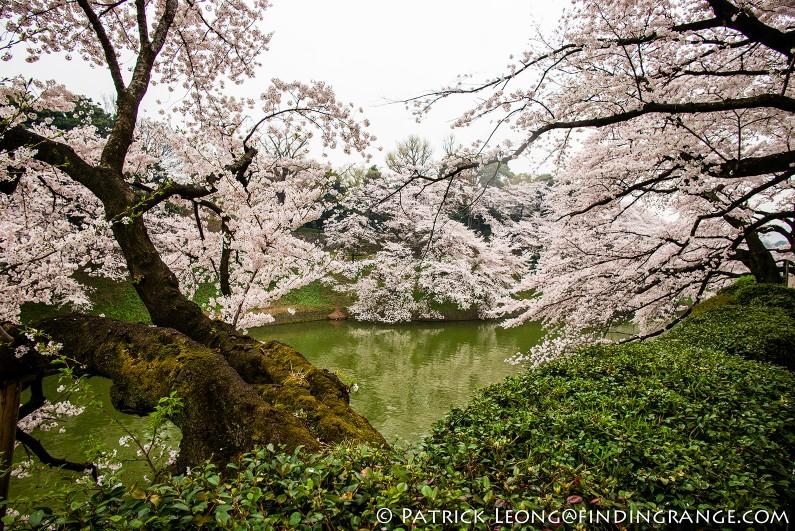 Leica-M-Typ-240-21mm-Summilux-Cherry-Blossom-Tree-Kitanomaru-Park-Chiyoda-Toyko-Japan-6