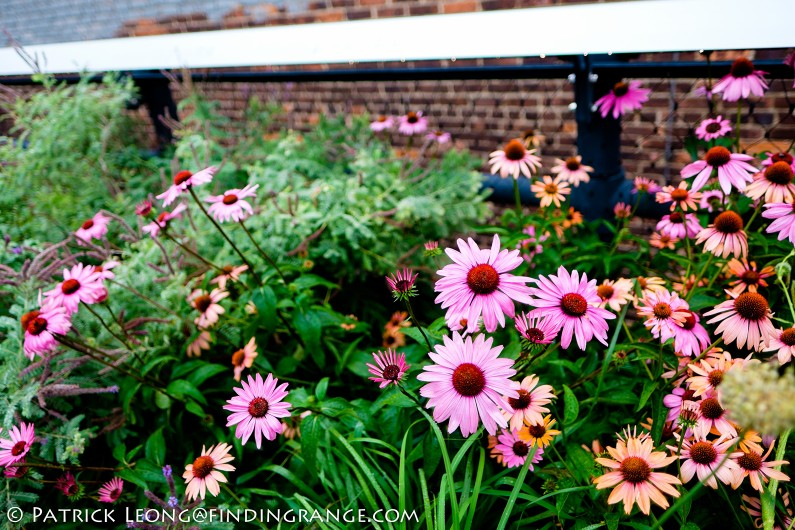 Fuji-X-E2-XF-16mm-F1.4-R-Lens-Bokeh-Flowers-New-York-City-High-Line