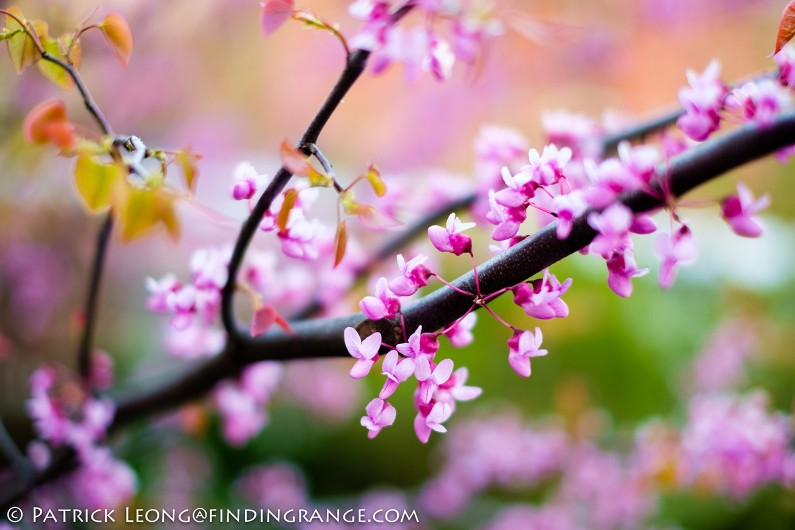 XF-35mm-F1.4-R-Lens-Flower-Bokeh-2