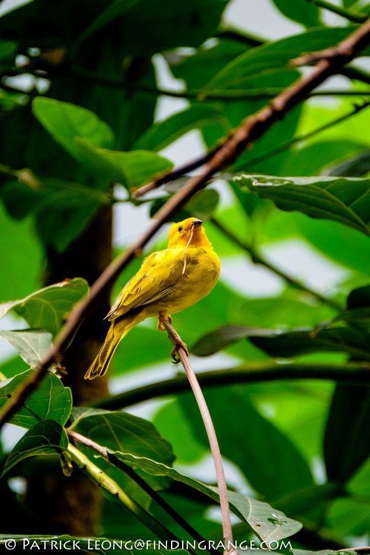 Fuji-X-T1-XF-100-400mm-f4.5-5.6-R-LM-OIS-WR-Lens-Bronx-Zoo-Bird-3