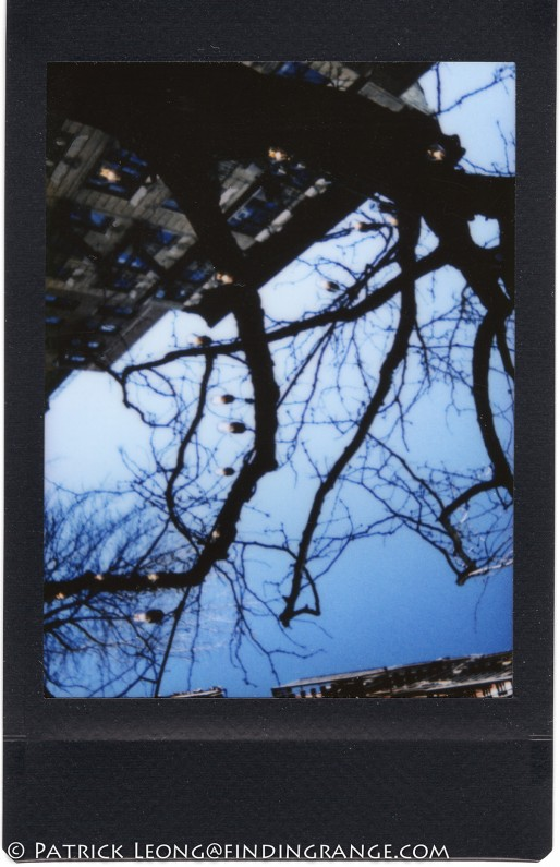 Leica-Sofort-Scan-Picture-Tree-NYC
